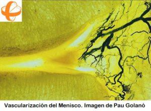 sutura_meniscal_vascularizacion